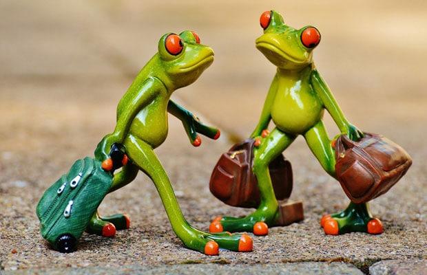 grenouilles de voyage