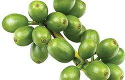 grains de cafe vert